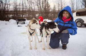 Dog-Mushing Tour in Northern Norway - Chapter Two: Our Five Husky Dogs