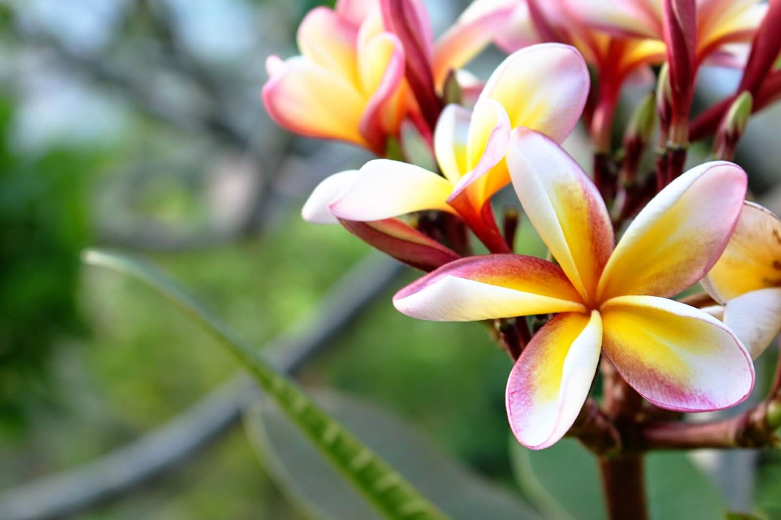 In photos: Flowers from Thailand