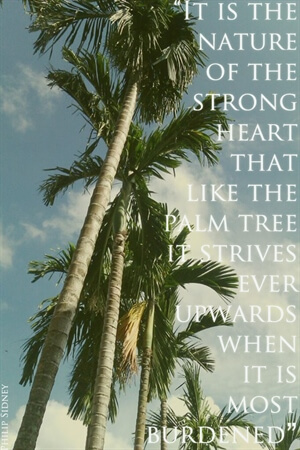 Inspiration: On strong hearts and palm trees...