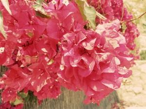 Las Flores: Alicante, Spain